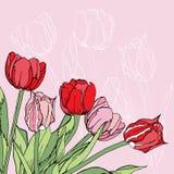 Hintergrund mit den roten und rosa Tulpen Stockbild