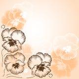 Hintergrund mit den weißen und braunen Blumenveilchen Stockfotografie