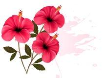 Hintergrund mit drei rosafarbener Blumen Stockbild