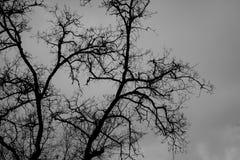 Hintergrund mit einem alten Baum Stockbild