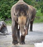 Hintergrund mit einem Elefanten, der Zirkus zeigt Lizenzfreie Stockfotografie