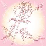 Hintergrund mit einer rosa Pfingstrose stock abbildung