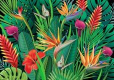 Hintergrund mit exotischen tropischen Blumen Lizenzfreies Stockfoto