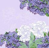 Hintergrund mit Flieder und weißen Pfingstrosen stock abbildung