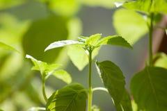Hintergrund mit Frühlingsgrüns Lizenzfreies Stockbild