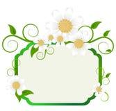 Hintergrund mit Gänseblümchen Lizenzfreie Stockbilder