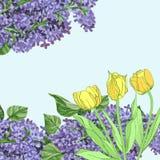 Hintergrund mit gelben Tulpen und Flieder Stockfoto
