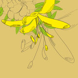 Hintergrund mit gelber Blume Stockfoto