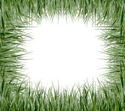 Hintergrund mit grünem Gras Stockfotos
