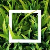 Hintergrund mit grünem Gras und weißem Rahmen Materielles Konzept des Entwurfes, verspotten oben Lizenzfreies Stockfoto
