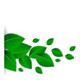 Hintergrund mit grünen Blättern Stockbilder
