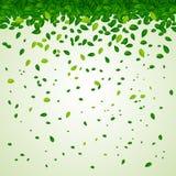 Hintergrund mit grünen Blättern Stockfotografie