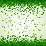Hintergrund mit grünen Blättern Stockbild