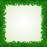 Hintergrund mit grünen Blättern Lizenzfreies Stockfoto