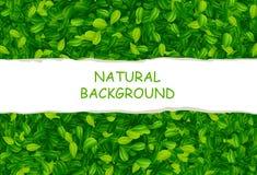 Hintergrund mit grünen Blättern Lizenzfreie Stockbilder