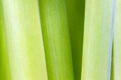 Hintergrund mit grünen Stämmen Stockfotografie