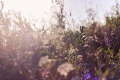 Hintergrund mit Gras in der Wiese Stockbild