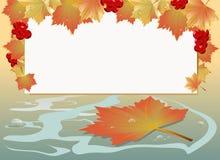 Hintergrund mit Herbst-Ahornblättern Stockfotografie