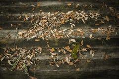 Hintergrund mit Holz und Blättern Stockbilder