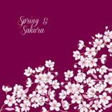Hintergrund mit Kirschblüte Lizenzfreies Stockfoto