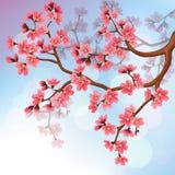 Hintergrund mit Kirschblüte-Blüten Lizenzfreie Stockfotos