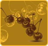 Hintergrund mit Kirschen, Handzeichnung. Vektorkranke Lizenzfreie Stockbilder