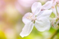 Blüht leicht lizenzfreie stockfotografie