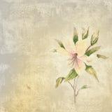 Hintergrund mit Lilienblume Stockbilder