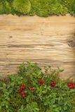 Hintergrund mit Lingonberries und altes rustikales hölzernes Brett und Moos Lizenzfreies Stockbild