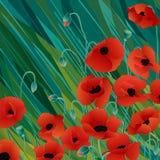 Hintergrund mit Mohnblumen stock abbildung