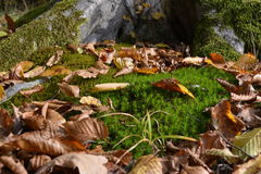 Hintergrund mit Moos und Blättern Lizenzfreie Stockbilder