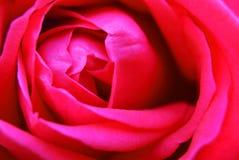Hintergrund mit Nahaufnahmeansicht der schönen Rosarose Stockfoto
