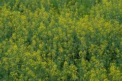 Hintergrund mit natürlicher gelber Blume stockbild