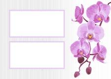 Hintergrund mit Niederlassungsorchidee Stockbilder