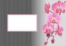 Hintergrund mit Niederlassungsorchidee Stockfoto