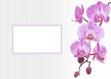 Hintergrund mit Niederlassungsorchidee Stockfotos