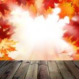 Hintergrund mit orange Autumn Maple Leaves Lizenzfreies Stockfoto