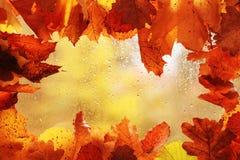 Hintergrund mit orange Blättern Lizenzfreie Stockfotos
