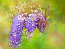 Hintergrund mit purpurroten Blumen Stockbilder