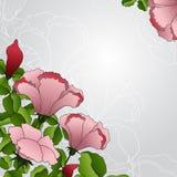Hintergrund mit rosa Blumen Lizenzfreie Stockfotografie