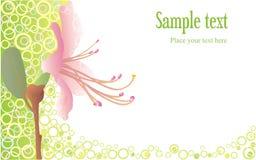 Hintergrund mit rosafarbener Blume Lizenzfreies Stockfoto