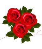 Hintergrund mit roten Rosen. Vektor Stockbilder