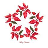 Hintergrund mit roter Poinsettia Stockbilder