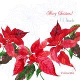 Hintergrund mit roter Weihnachtspoinsettia Stockbild