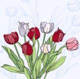 Hintergrund mit Rotwein und weißen Tulpen Stockbild