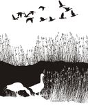 Hintergrund mit Schilfen und wilden Gänsen Lizenzfreie Stockbilder