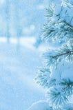 Hintergrund mit schneebedecktem Baum lizenzfreies stockfoto