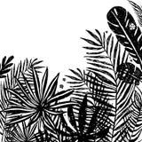 Hintergrund mit schwarzen Schattenbildern von tropischen Anlagen und von Blättern Botanische Illustration des Vektors, Elemente f Lizenzfreie Stockfotos