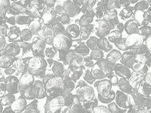 Hintergrund mit Seeschnecken redigieren wie sein gezogenes lizenzfreies stockfoto