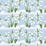 Hintergrund mit snowdrops Lizenzfreie Stockfotos